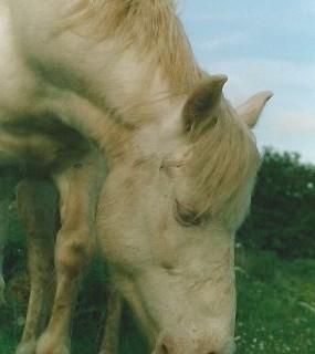 Briony, our albino