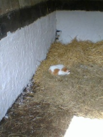 Our cat Billy makes sure that the horses have nice and comfy beds!