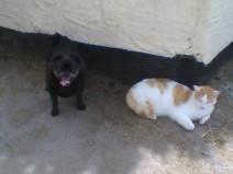 Lovely Sparky & Billy
